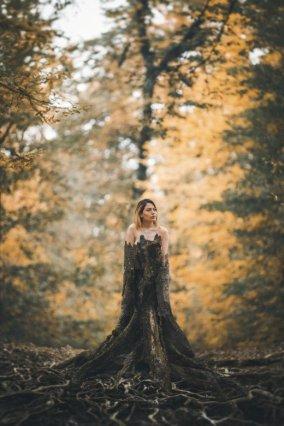 naked tree image